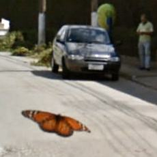A butterfly dancing across the road in front of the Google Streetview car